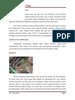 Paper Ikan Cupang