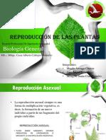 Reproducción de las plantas.pptx