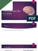 10vascularidadsnc-131015193109-phpapp02