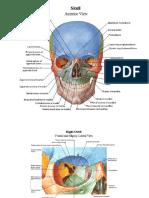 # Atlas of Human Anatomy - Netter - 2006.pdf