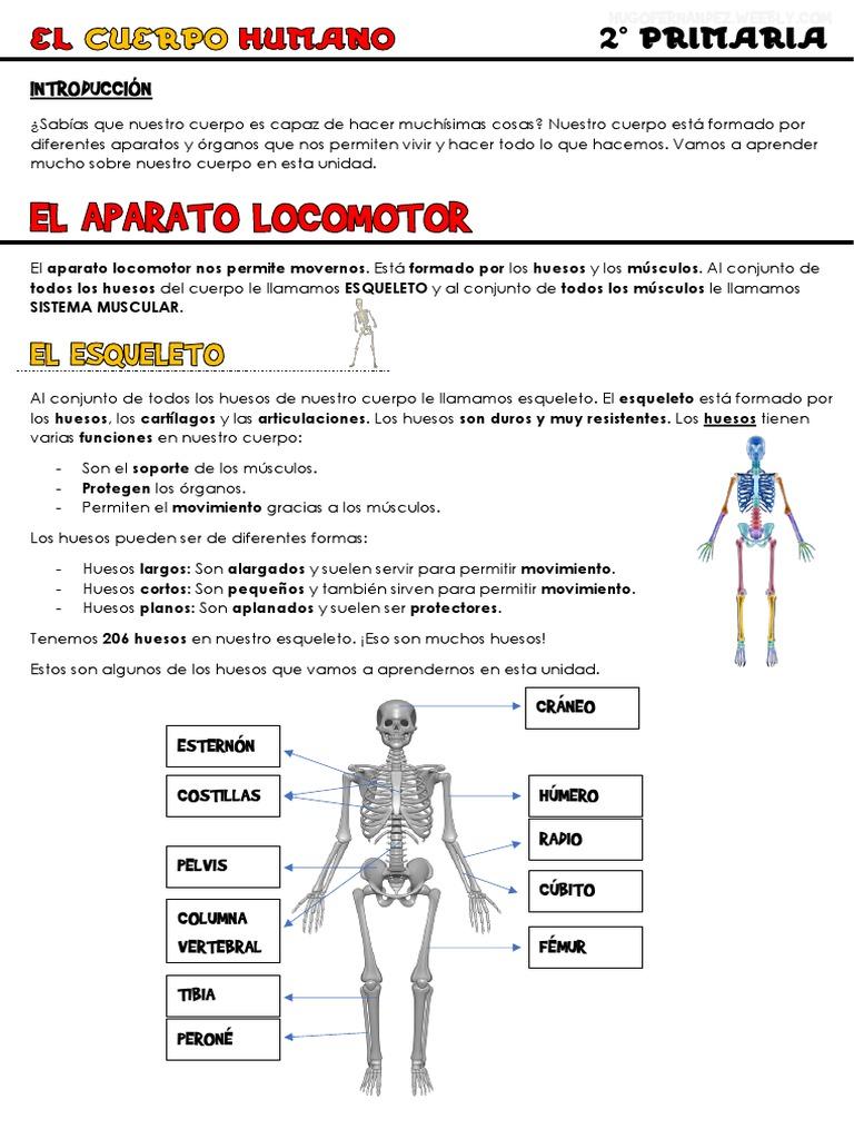 unidad 1 el cuerpo humano