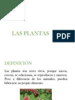 Plantas Sin Flores Tema