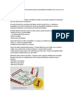 Microbiologia - Tincion DAPI, FISH, DGGE, ISRT, CARD, Electroforesis y Biorremediacion ambiental