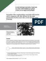 Descripcion Sintomatologia Enfermedades Granadilla