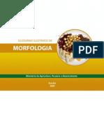 Glossario Ilustrado de Morfologia
