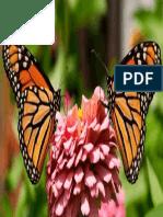 mariposas-800x375