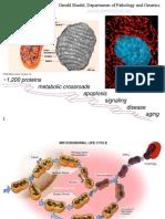 12 Tambahan DNA Mitokondria