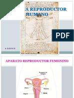sistema reproductor.pptx