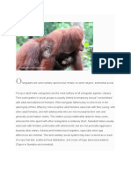 Orangutan Behavior
