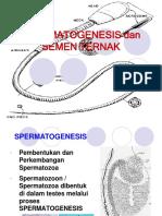 5 Spermatogenesis 3