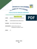TRABAJO DE SEMILLAS CITRUS.docx