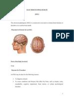 Electroencephalogram BY BHERU LAL