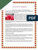 Historia de los tulipanes.docx