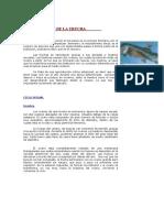 reproduccion.pdf