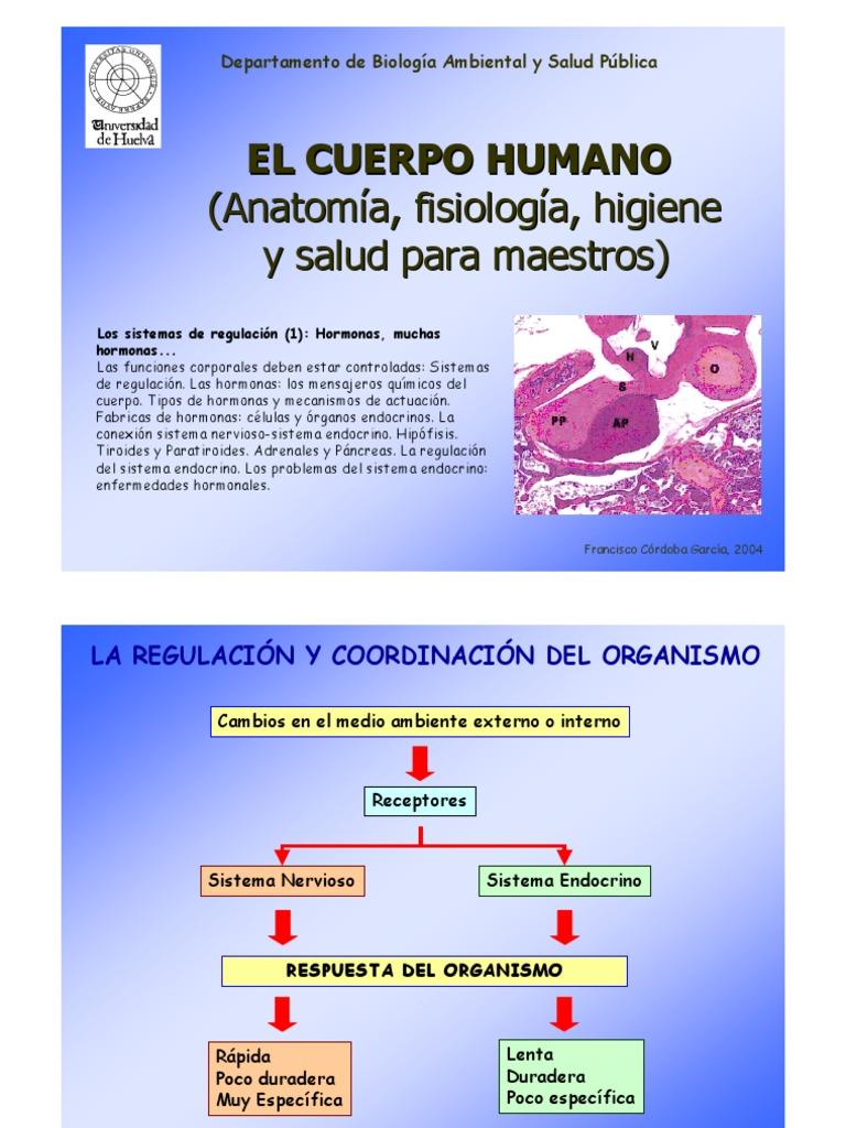 T9 Hormonas