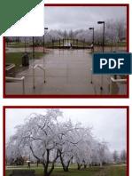 Frozen Cherry Trees