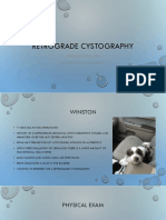 retrograde cystography
