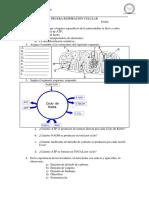 biologia. pruebaimedio. respiracion_celular.pdf
