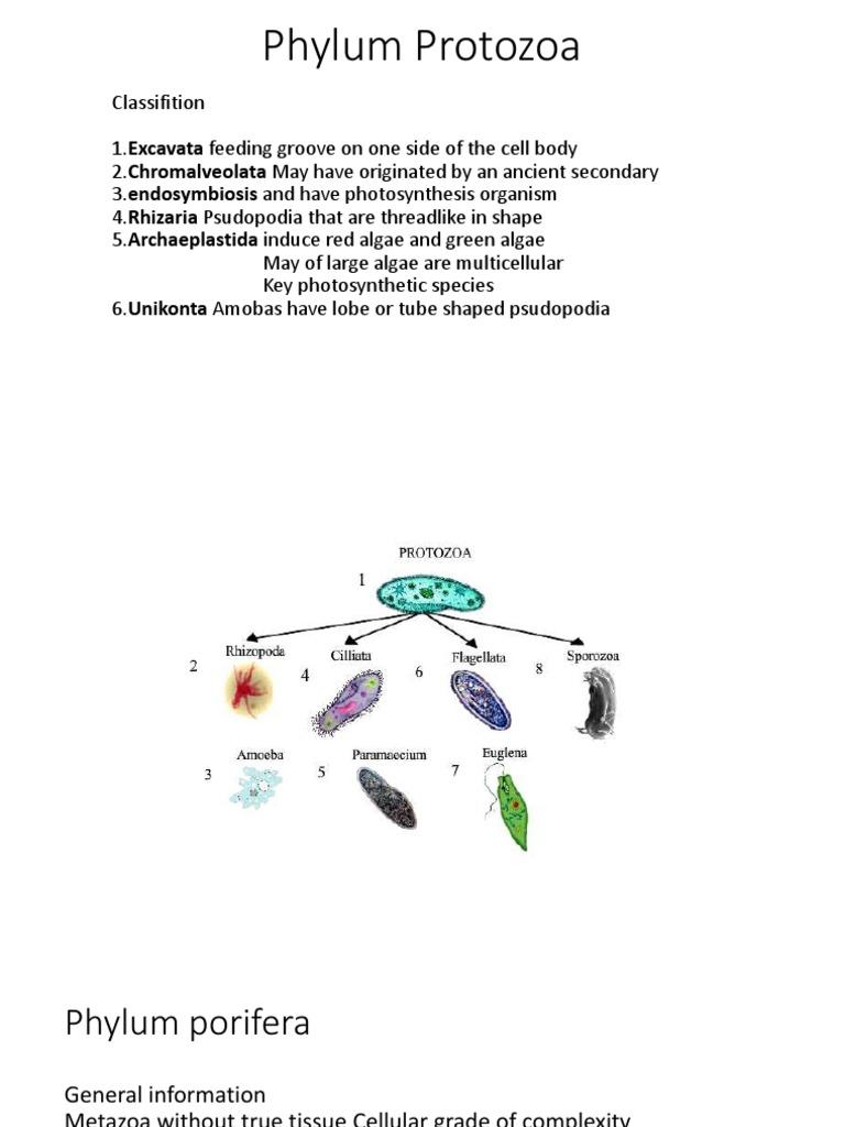 Phylum Protozoa | Sponge | Mollusca