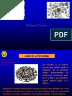 B3. Phylum Briozoos