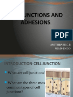 Cell Junctions and Adhesions