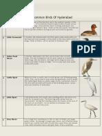 Common Birds of Hyderabad