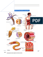 Digestão extracelular.doc