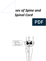 Diseases of Spine And