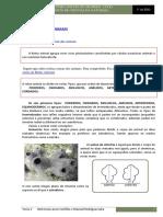 TEMA_5_OS_ANIMAIS.pdf