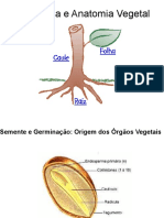 morfologiavegetalsementeraizcauleefolha-111107045826-phpapp02