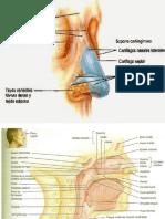 Aparato-respiratorio-m1f.pptx