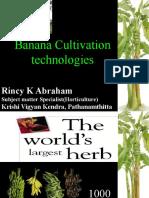 Banana Cultivation Technologies