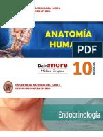 Semana 10 (Sistema Endocrino).pdf