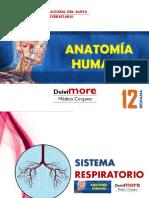 Semana 12 (Sistema Respiratorio).pdf