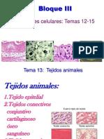 TEMA 13 Tejidos Animales