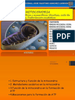 Tema 4 - Mitocondria
