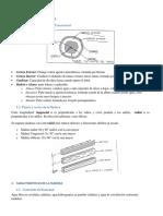 Estructura de La Maderresuena