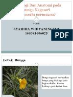 Morfologi Dan Anatomi pada bunga Thevetia peruviana.pptx
