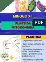 Plastida Mitokondria 11.pdf