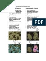 Perbedaan Sifat Optik Biotit Dan Olivine