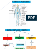 Sistema Nervioso