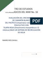 Camarón Blanco Del Pacifico en Policultivo Con Tilapia Roja