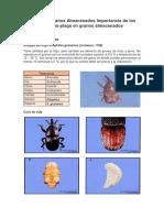 Plagas en Granos Almacenados Importancia de Los Insectos