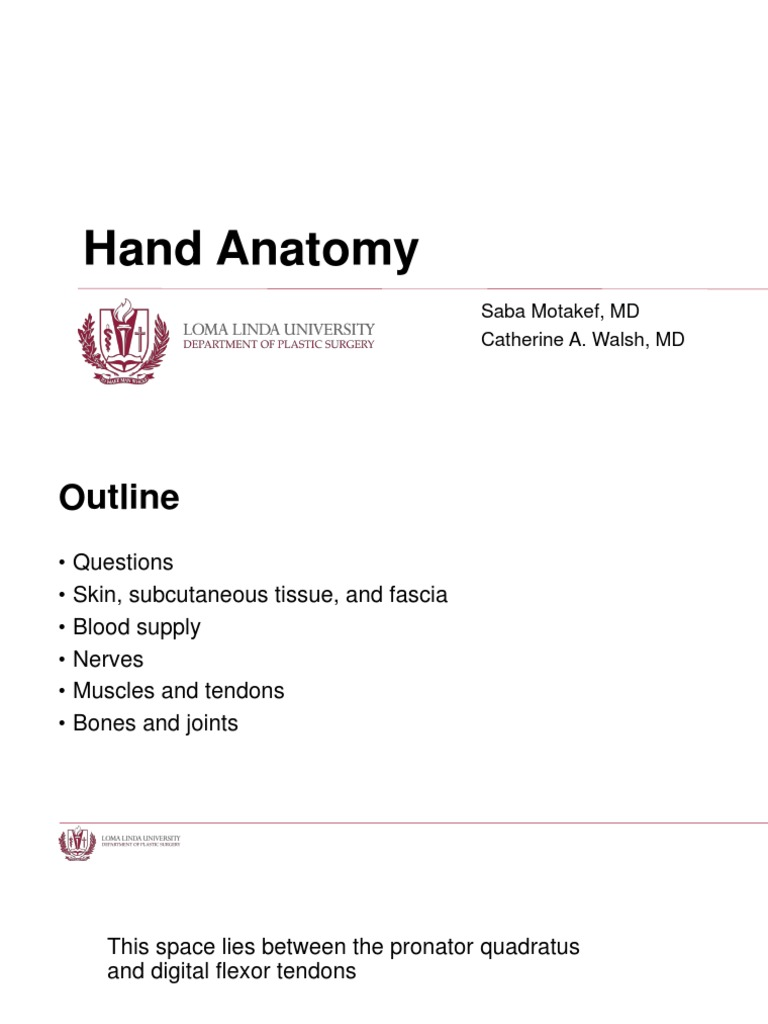 Hand Anatomy.pptx | Thumb | Hand