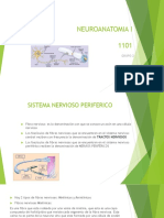 Neuroanatomia i Snp