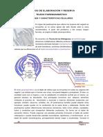 10. Tejidos de Elaboracin y Reserva Parnquimas