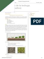 Fenología de La Lechuga (Lactuca Sativa)