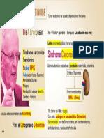 Tumor Carcinoide