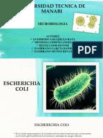 E.coli - Microbiologia
