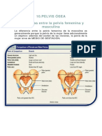 Diferencias entre la pelvis femenina y masculina.docx
